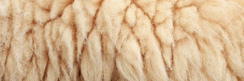A close up of sheepskin.