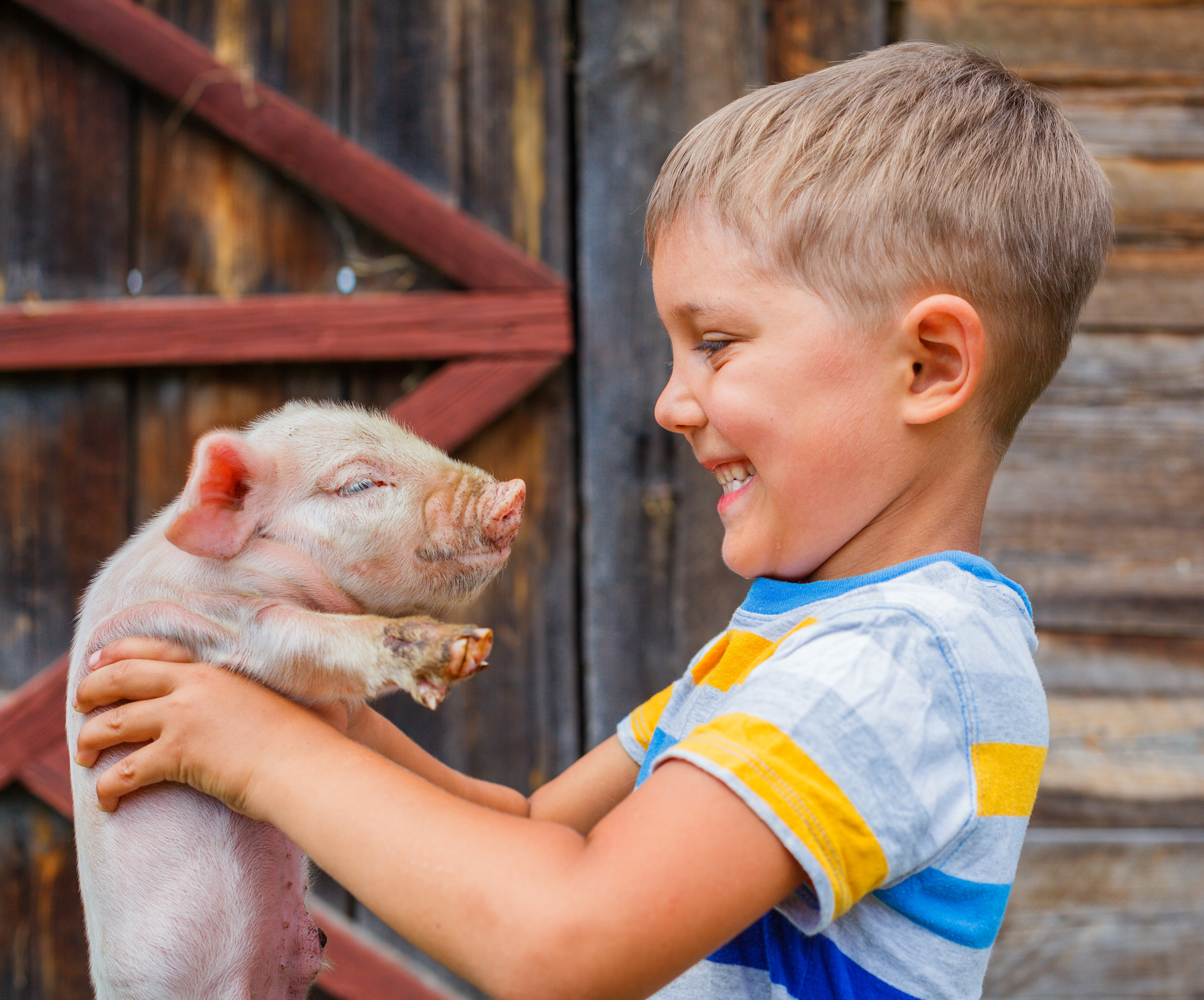 Game Ideas For Kids Play Pigs On The Loose Omo