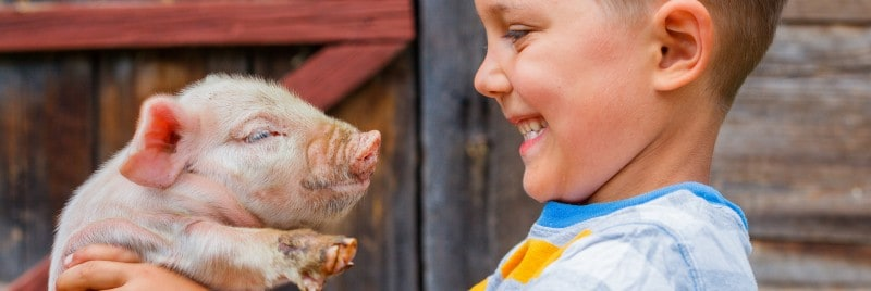 A young boy holding a piglet.