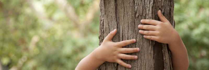 A young child wrapping their arms around a tree trunk.