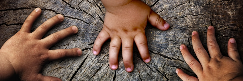 Closeup image of hands on a tree.